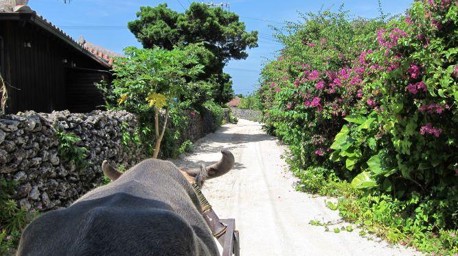 星のや竹富島に泊まる/沖縄の原風景に癒される、寛ぎのラグジュアリーステイ3日間/島全体がパワースポット