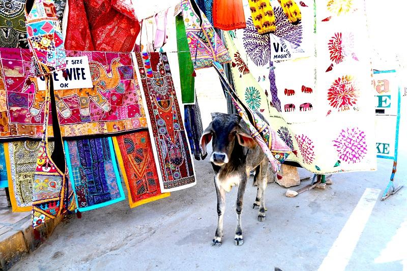 「旅と本」大人女子の南インド気まま旅★タラ・ブックス工房を訪問・カンチプラム観光+デリーフリープラン8日間/ふたり旅